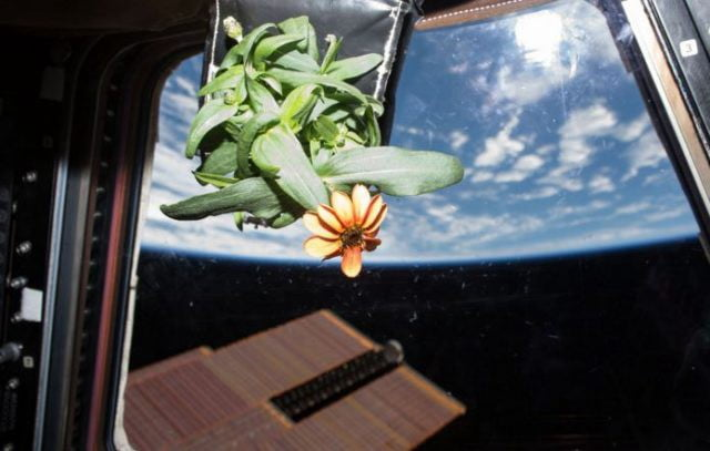 How Plants Sense Gravity ?